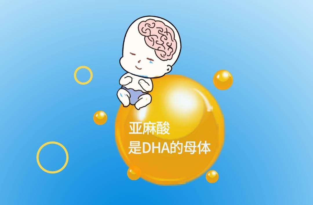怀孕后要不要补充DHA?DHA有什么好处?